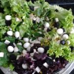 Salada de Folhas com Molho de Iogurte para Festas