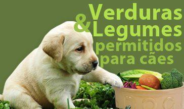 verduras-legumes-permitidas-caes-tn